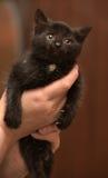 Gatito negro en manos Foto de archivo