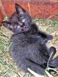 Gatito negro lindo imágenes de archivo libres de regalías
