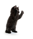 Gatito negro lindo en blanco Fotografía de archivo