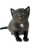 Gatito negro que mira para arriba Fotos de archivo