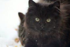 gatito negro salvaje en la nieve Foto de archivo libre de regalías