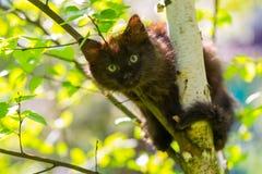 Gatito oscuro en un árbol en un fondo de hojas del abedul Fotos de archivo