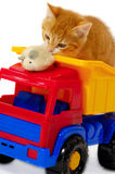 Gatito palying con el ratón Imágenes de archivo libres de regalías