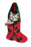 Gatito para la Navidad. Fotografía de archivo libre de regalías