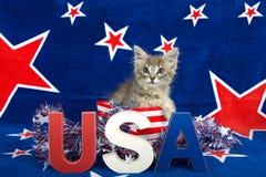 Gatito patriótico del gato atigrado Fotos de archivo libres de regalías