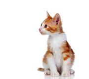 Gatito pelirrojo hermoso Foto de archivo