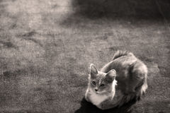 Gatito peludo Foto de archivo