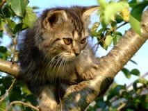 Gatito peludo en árbol Foto de archivo libre de regalías