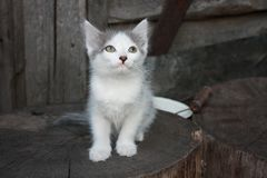 Gatito pensativo en un tocón de madera Foto de archivo