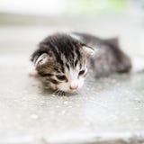 Gatito perdido fotografía de archivo