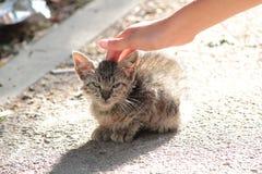 Gatito perdido en la calle imagen de archivo libre de regalías