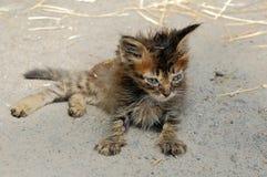 Gatito perdido enfermo Foto de archivo libre de regalías