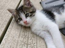 Gatito perezoso foto de archivo