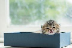 Gatito perezoso en caja fotos de archivo libres de regalías