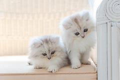 Gatito perezoso lindo fotografía de archivo libre de regalías