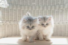 Gatito perezoso lindo fotografía de archivo
