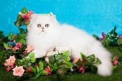Gatito persa con las flores imagen de archivo