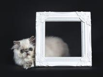 Gatito persa que pone al lado del marco blanco de la foto Foto de archivo libre de regalías