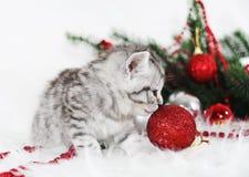 Gatito precioso con bolas de la Navidad y un árbol de navidad Fotografía de archivo