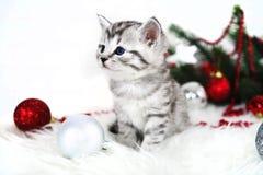 Gatito precioso con bolas de la Navidad y un árbol de navidad Imagen de archivo libre de regalías