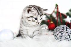 Gatito precioso con bolas de la Navidad y un árbol de navidad Imagenes de archivo