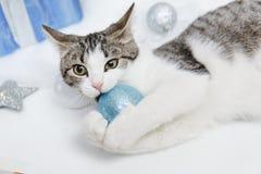 Gatito precioso con bolas de la Navidad y un árbol de navidad Gatito del Año Nuevo Fotos de archivo