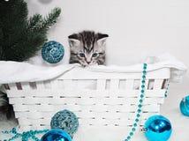 Gatito precioso en una cesta debajo del árbol de navidad Gatito del Año Nuevo Imagen de archivo