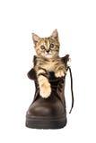 Gatito precioso en zapato de seguridad del marrón de A en el fondo blanco Imágenes de archivo libres de regalías