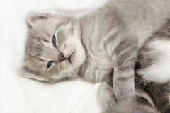 Gatito que abraza Foto de archivo