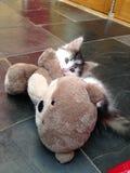 Gatito que ataca a Teddy Bear Imagen de archivo