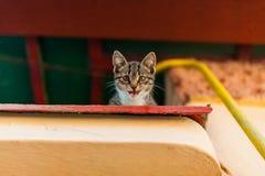 Gatito que bosteza Fotografía de archivo libre de regalías