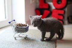 Gatito que come de un carro de la compra con el alimento para animales Imagen de archivo libre de regalías