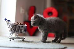 Gatito que come de un carro de la compra con el alimento para animales Fotografía de archivo libre de regalías