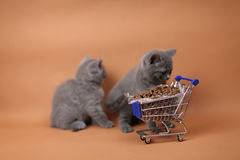 Gatito que come de un carro de la compra con el alimento para animales Foto de archivo libre de regalías