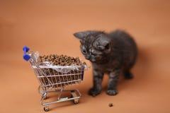 Gatito que come de un carro de la compra con el alimento para animales Fotos de archivo libres de regalías
