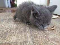 Gatito que come un hueso Fotos de archivo
