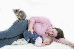 Gatito que consigue en el cuadro Fotos de archivo libres de regalías