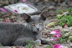 Gatito que descansa sobre la tierra Imagen de archivo libre de regalías