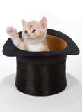 Gatito que dice hola Foto de archivo libre de regalías