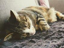Gatito que duerme en el sofá en sala de estar foto de archivo