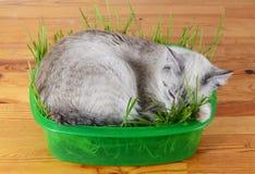 Gatito que duerme en hierba Imagen de archivo libre de regalías