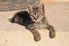 Gatito que espera Imagen de archivo