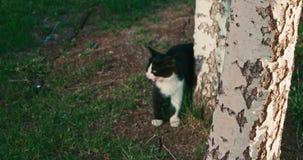Gatito que juega cerca de un registro del árbol almacen de metraje de vídeo