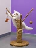 Gatito que juega con el juguete fotografía de archivo libre de regalías