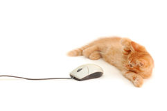 Gatito que juega con el ratón del ordenador Foto de archivo