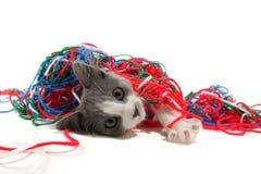 Gatito que juega con hilado Foto de archivo