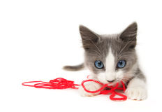 Gatito que juega con hilado Fotos de archivo libres de regalías