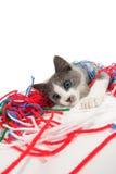 Gatito que juega con hilado Fotografía de archivo