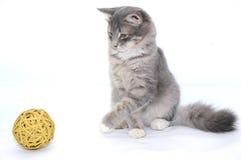 Gatito que juega con la bola fotografía de archivo
