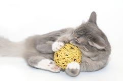 Gatito que juega con la bola imagen de archivo
